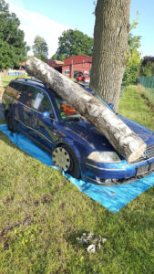 Lage: Baum auf Auto