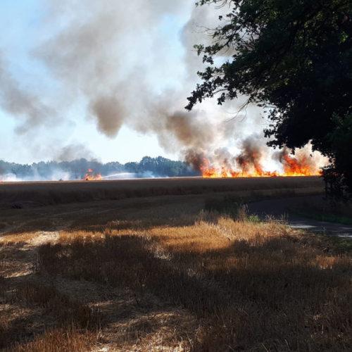 23.07.2019 – Getreidefeldbrand in Kiho/Stelle